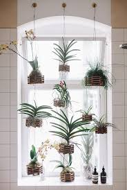 Freunde von Freunden: hanging window plants in the bathroom/ sfgirlbybay .  also great as a substitute for blinds