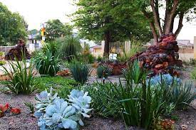 native gardens ben s garden