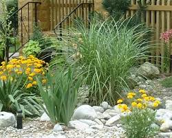 Small Picture 90 best Grasses images on Pinterest Landscaping ideas