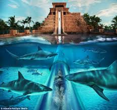 cool bedrooms with water slides. Brilliant Slides Thanks To An Underwater Passage Indiana Jones Fans Can Zoom Through  Sharkinfested Waters For Cool Bedrooms With Water Slides