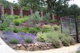 Steep Hill Garden Design Dry Hillside Garden With Deer Visitors In Sonoma County Kim