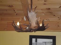 moose chandelier 203