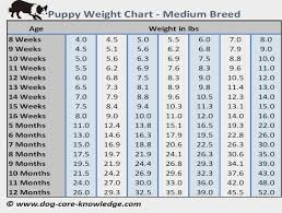 Toy Poodle Growth Chart Puppy Weight Chart This Is How Big Your Dog Will Be