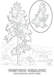 Christmas Tree Coloring Sheet Tree Printable Coloring Page State