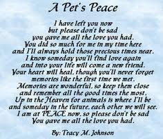 Say a prayer for my poor, sick little Mercedes. | Pet friendly ... via Relatably.com