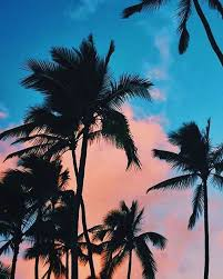 900 palm tree images download hd pictures photos on unsplash. Blue Peach Sky And Palm Trees Iphone Wallpaper Palm Trees 640x800 Download Hd Wallpaper Wallpapertip