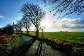 Einen stammbaum online zu erstellen, hat viele vorteile für die ahnenforschung. Stammbaum Tapete Naturliche Landschaft Himmel Natur Baum Wolke 452295 Wallpaperuse