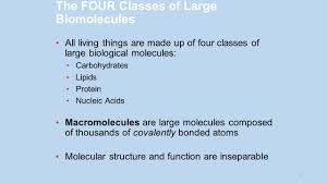 Functions Of Nucleic Acids The Structure And Function Of Macromolecules Part Ii
