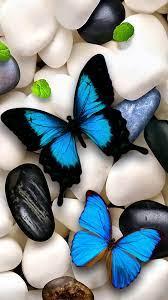 Background Butterfly Wallpaper ...