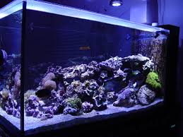welcome to led pacific aquarium fish tank lighting led reef and tropical spot lights are our speciality