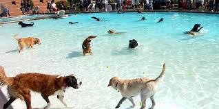 dog pool ramp dog pool ramp south africa