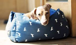 washable dog bed. Wonderful Washable Best Washable Dog Beds On Washable Dog Bed