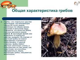 Презентация на тему Грибы Многообразие и значение грибов  3 Общая характеристика грибов