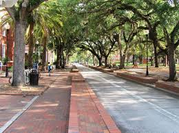 university of florida admission sat scores admit rate tree lined walk at the university of florida