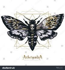 стоковая векторная графика Deathshead Hawk Moth Sacred Geometry