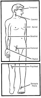 Peripheral Pulses Charting Nursing Fundamentals Ii Multimedia Edition Vital Signs