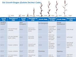 Wheat Growth Stages Chart Oat Growth And Development Yara Uk