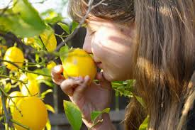 Welcome To Arange A Beautiful Place Of IranIranian Fruit Trees