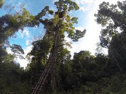 The Lost Treehouse Tribes Of The RainforestKorowai Treehouse
