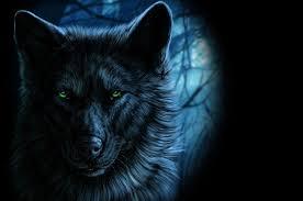 wolf wallpaper hd. Beautiful Wolf Download  To Wolf Wallpaper Hd