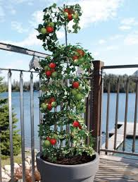 5 vertical vegetable garden ideas for beginners encourage your vine like tomatoes and beans to