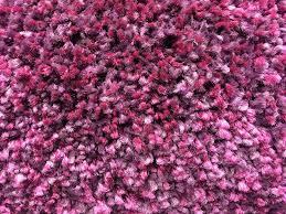 purple carpet texture. carpet texture fibers textile purple tissue woven