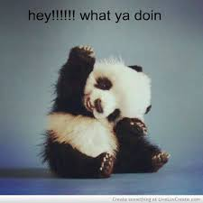 Quotes About Pandas Custom Nature QuotesNew