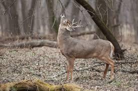 Deer Feeding Chart 2018 Ga Best Deer Feeding Times For Trophy Buck 2019 Cabin Nation