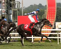 Image result for toto sport betting