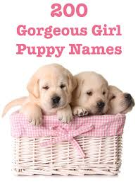 Cute names for girl puppies