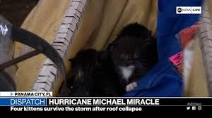 watch four kittens were found in a home after the roof caved in during hurricane michael