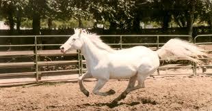 white horses. Unique Horses And White Horses S