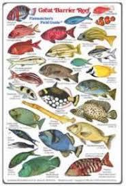 Saltwater Fish Identification Chart Virginia