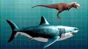 megalodon shark compared to t rex. Contemporary Shark Megalodon Compared To TRex Inside Shark Compared To T Rex G