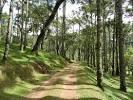 imagem de Pirangu%C3%A7u+Minas+Gerais n-17
