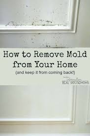 killing mold inside walls these clean mold painted walls killing mold inside walls how to