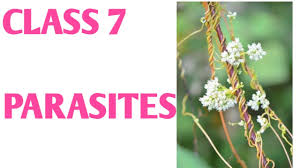 Meaning of parasite in english. Define Parasite In Hindi What Is Parasite Host Relationship In Hindi Darshan Classes Youtube