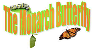 Image result for images of monarch butterfly life cycle