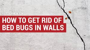 get rid of bed bugs in walls
