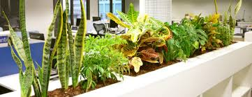 office greenery. Full Image For Gorgeous Office Plants Fluorescent Light 69 The Best Greenery