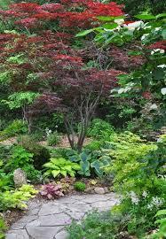 Zen Garden Designs Impressive Growing And Care For Japanese Maples Exterior Backyard