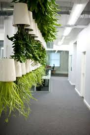 office planter. great as a screen or divider between reading areas crisp clean colours office plants house indoor houseplants planter