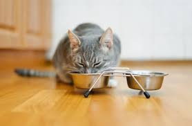 chat alimentation mixte