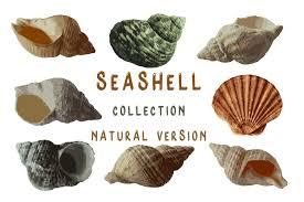 Seashell Collection Natural Version
