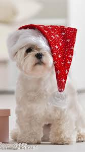 Explore christmas puppy wallpaper on wallpapersafari   find more items about christmas dog computer wallpaper picture, christmas puppy wallpaper for computer phone. Christmas Puppy Wallpaper Christmas Little Dog 1080x1920 Download Hd Wallpaper Wallpapertip