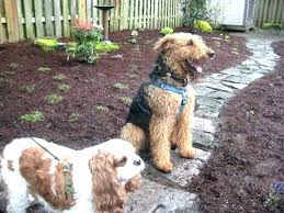 dog friendly ground cover. Brilliant Cover Dog Ground Cover For Dogs Durable Friendly Backyard No Grass Large Size Of  Run Plans Modular With Dog Friendly Ground Cover