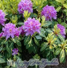"""Résultat de recherche d'images pour """"gifs de rhododendrons"""""""