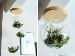 air plant terrarium diy tutorial how to make a hanging terrarium diy air plant terrarium kit