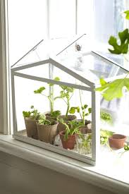 mini indoor greenhouse terrarium design terrarium indoor greenhouse white color mini house design with many plant indoor mini greenhouse starter kit