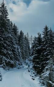 Free download Winter iPhone Wallpapers ...